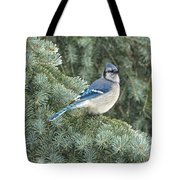 Majestic Blue Jay Tote Bag