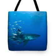 Male Great White Shark And Bait Fish Tote Bag
