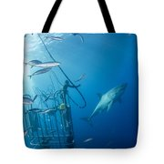 Male Great White Shark And Divers Tote Bag