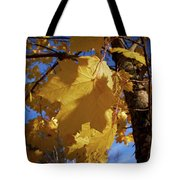 Maple In Fall Tote Bag