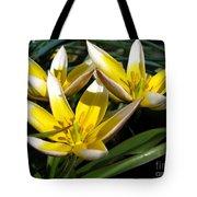 Mini Botanical Tulip Named Dasystemon Tarda Tote Bag