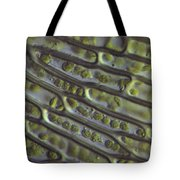 Moss Cells Tote Bag