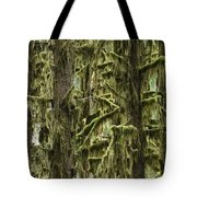 Moss Covered Trees, Hoh Rainforest Tote Bag