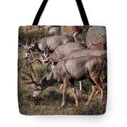 Mule Deer Bucks Tote Bag