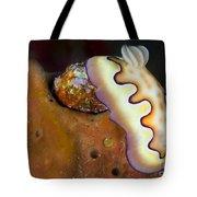 Nudibranch On Orange Sponge, Kimbe Bay Tote Bag