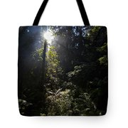Old Forests At Evo Tote Bag