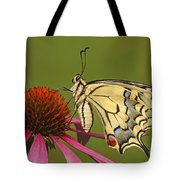 Oldworld Swallowtail Papilio Machaon Tote Bag