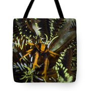 Orange And Brown Elegant Squat Lobster Tote Bag