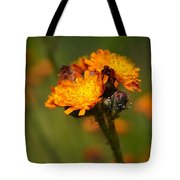 Orange Hawkweed Tote Bag