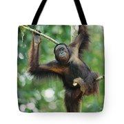 Orangutan Pongo Pygmaeus Adult Sitting Tote Bag