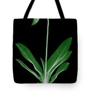Orchid Plant X-ray Tote Bag