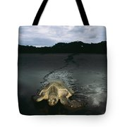 Pacific Ridley Turtle Lepidochelys Tote Bag