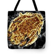 Phagocytosis Of Yeast Particle Tote Bag