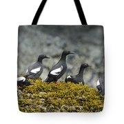 Pigeon Guillemot Cepphus Columba Group Tote Bag