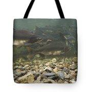 Pink Salmon Oncorhynchus Gorbuscha Tote Bag