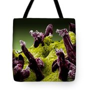 Plasmodium Gallinaceum, Sem Tote Bag by Science Source