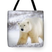 Polar Bear, Churchill, Manitoba Tote Bag