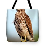 Portrait Of A Red Shouldered Hawk Tote Bag