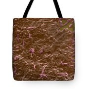 Potable Water Biofilm Tote Bag by Science Source