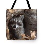 Raccoon Procyon Lotor Tote Bag
