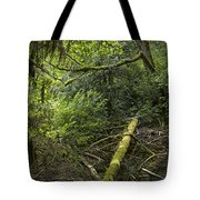 Rain Forest On Vancouver Island Tote Bag