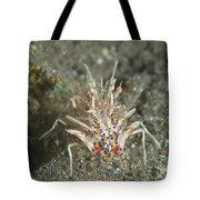 Rare Tiger Shrimp On Volcanic Sand Tote Bag