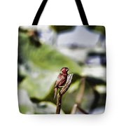 Red Faced Tote Bag
