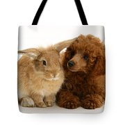 Red Toy Poodle And Rabbit Tote Bag
