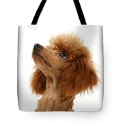 Red Toy Poodle Tote Bag