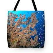 Reef Scene With Sea Fan, Papua New Tote Bag