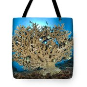 Reticulate Humbugs Gather Under Stone Tote Bag