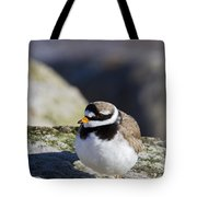 Ringed Plover Tote Bag