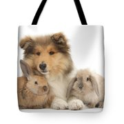 Rough Collie Pup With Two Young Rabbits Tote Bag