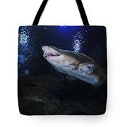 Sand Tiger Shark, Blue Zoo Aquarium Tote Bag