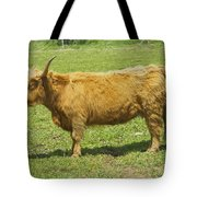 Scottish Highland Cow In Farm Field Maine Tote Bag