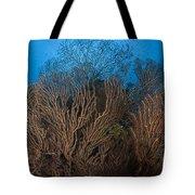 Sea Fan Seascape, Belize Tote Bag