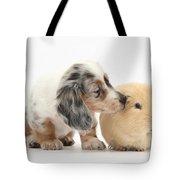 Silver Double Dapple Dachshund Pup Tote Bag