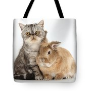 Silver Tabby Cat And Lionhead-cross Tote Bag