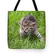 Small Kitten In The Grass Tote Bag