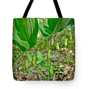 Solomon's Seal Wildflower - Polygonatum Commutatum Tote Bag