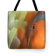 Spinecheek Anemonefish In Anemone Tote Bag