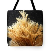Spiral-tufted Bryozoan Tote Bag
