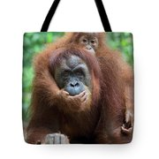 Sumatran Orangutan Pongo Abelii Mother Tote Bag