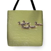 Swimming Ducks Tote Bag by Corinne Elizabeth Cowherd