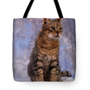 Tabby Cat Portrait Of A Cat Tote Bag