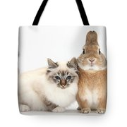 Tabby-point Birman Cat And Rabbit Tote Bag