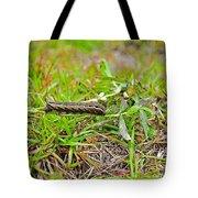 Tersa Sphinx Caterpillar Tote Bag