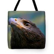 Hawk Eyes Tote Bag