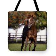 Thoroughbred Horse, Ireland Tote Bag