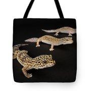 Three Female Leopard Geckos Eublepharis Tote Bag